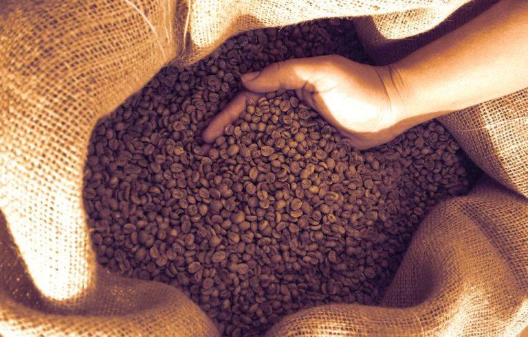 La Plateforme Indienne Du Café En Chaîne Est Adoptée Par 30 000 Agriculteurs